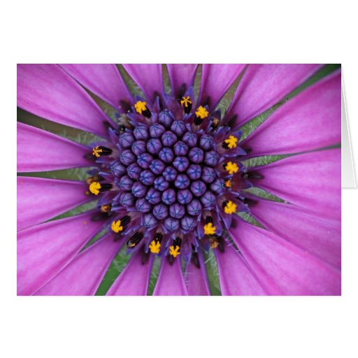 Purple Daisy Picture Greeting Cards