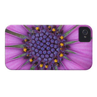 Purple Daisy Picture iPhone 4 Case