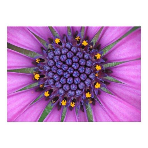 Purple Daisy Picture Custom Invitations