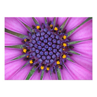 Purple Daisy Picture Personalized Announcements