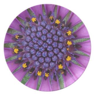 Purple Daisy Picture Dinner Plates