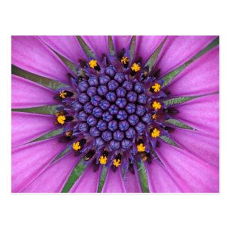 Purple Daisy Picture Postcard