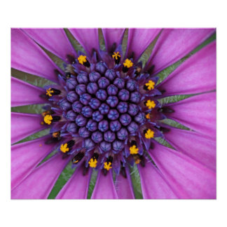 Purple Daisy Picture Poster