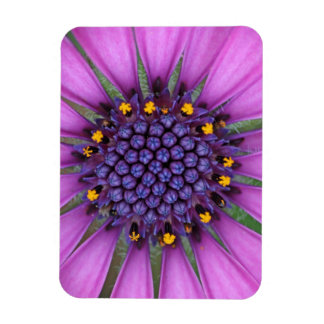 Purple Daisy Picture Rectangular Magnet