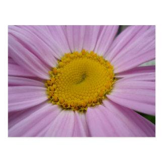 Purple Daisy Save the dates Postcard