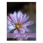 Purple Daisy Thank You Postcard