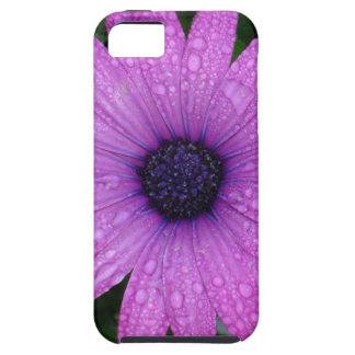 Purple Daisy with Raindrops Tough iPhone 5 Case