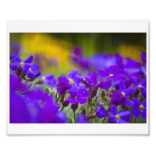 Purple Daze Photo Print