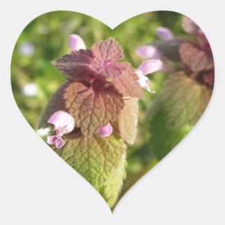 Purple Dead-nettle ( Lamium purpureum ) on green Heart Sticker