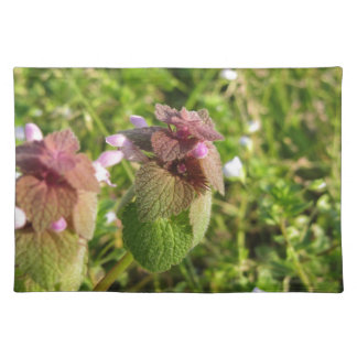 Purple Dead-nettle ( Lamium purpureum ) on green Placemat