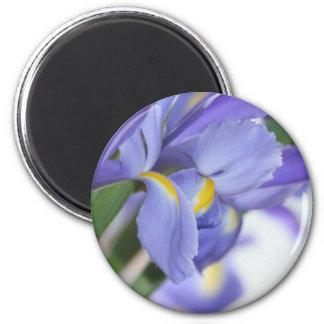 Purple Dream magnet