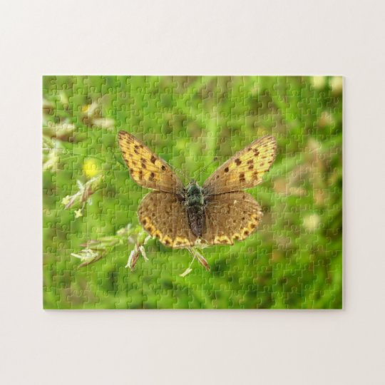 Purple Edged Copper Butterfly Photo Puzzle