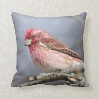 Purple Finch Cushion