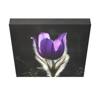 Purple Flower Artists Wrapped Canvas