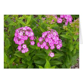 Purple flower blank note card