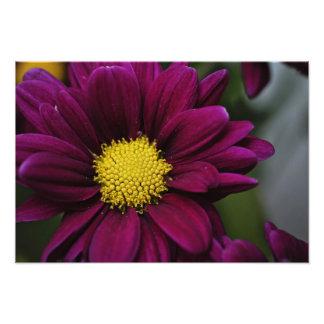 Purple Flower Print Photo Art