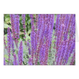 Purple flowers, Bruges, Belgium Card