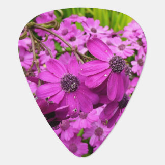 Purple Flowers from San Francisco Guitar Pick