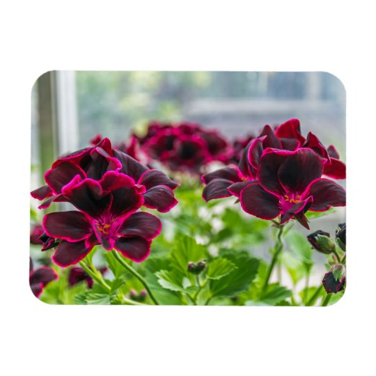 Purple flowers in and out of focus fridge magnet