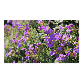 Purple flowers in bloom during Spring Business Cards