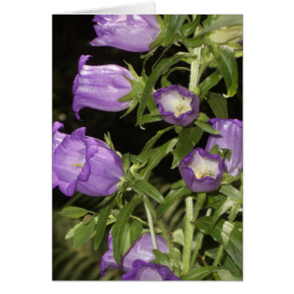 Purple flowers of Giverny Card