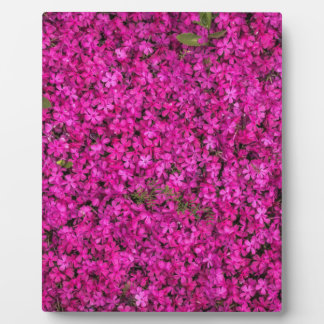 Purple Flowers Plaque