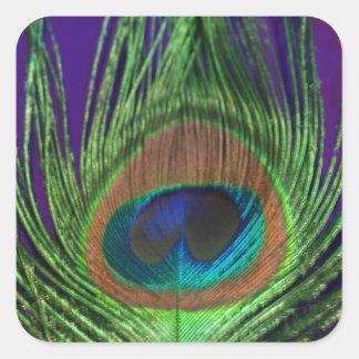 Purple Foil Single Peacock Square Sticker