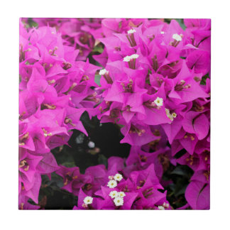 Purple Fuchsia Bougainvillea Background Ceramic Tile