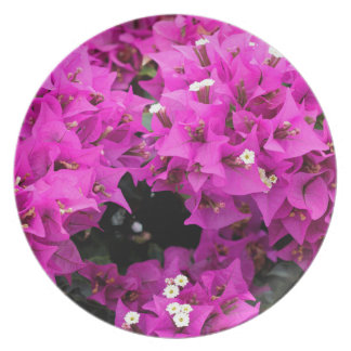 Purple Fuchsia Bougainvillea Background Plate