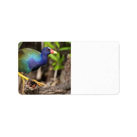 purple gallinule label