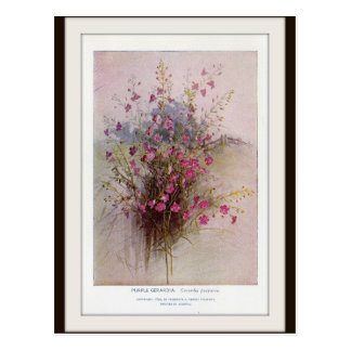 Purple Gerardia Botanical Wildflower Postcard