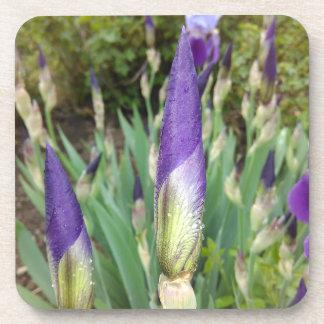 Purple German Iris Buds Coaster
