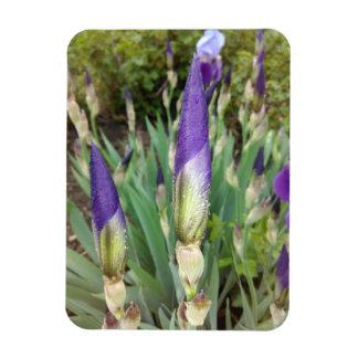 Purple German Iris Buds Magnet