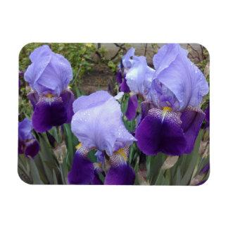 Purple German Irises Magnet