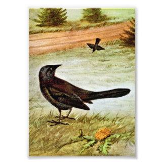 Purple Grackle Bird Art Photographic Print