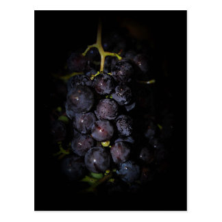 Purple Grapes Postcard