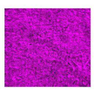 Purple grass pattern photograph