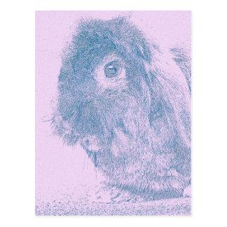 Purple haze rabbit postcards