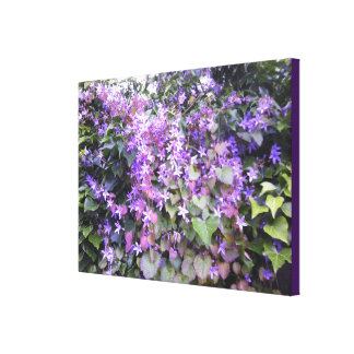 Purple Hedge Creeper Flower Photo Canvas Print