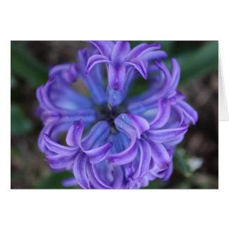 Purple Hyacinth Card