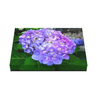 Purple Hydrangea big Canvas Print
