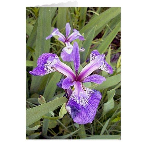 Purple Iris 2 Greeting Card