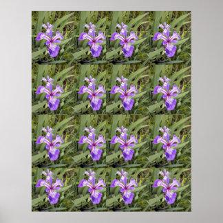 Purple Iris 2 Poster