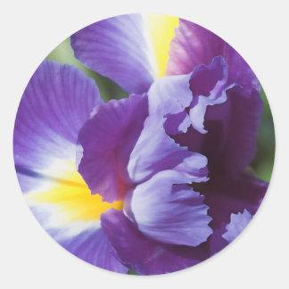 purple iris close up classic round sticker