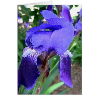 Purple Iris Delight Note Card