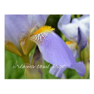 Purple Iris-Dreams come true Postcard