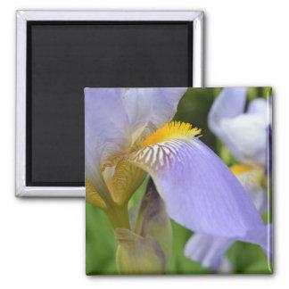 Purple Iris-Dreams come true Square Magnet