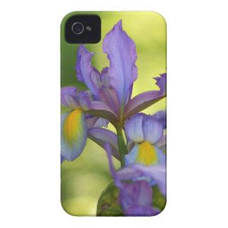 Purple Iris flower Case-Mate iPhone 4 Case