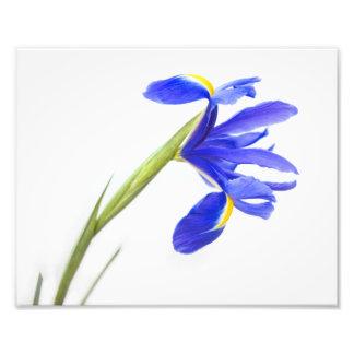 Purple Iris Flower Art Photo