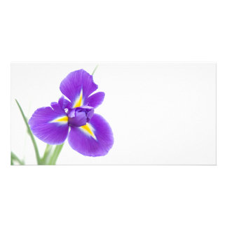 purple iris flowers, space for text photo cards